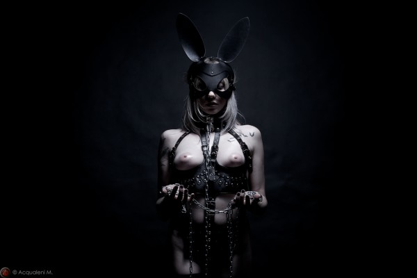 Featured Image bunny